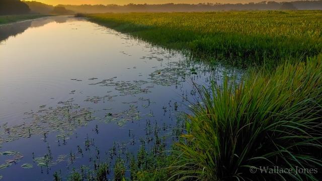 Itchepackesassa Creek Wetland